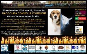 Accendi una candela per i beagle di #Verona – Il richiamo della Foresta - Blog - Repubblica.it