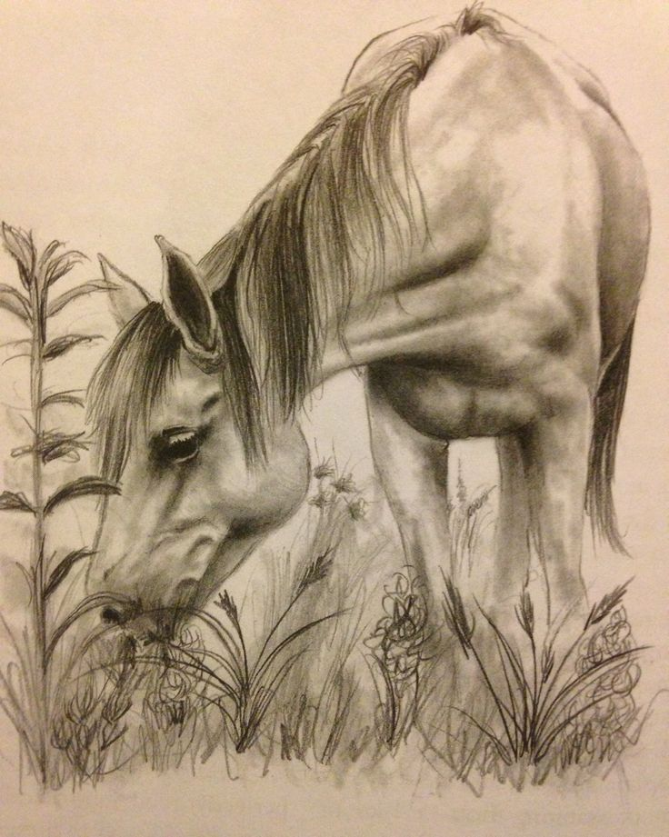 running horses – Defining the West  |Horse Art Drawings
