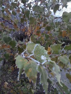 English:learn,read,enjoy!: November by Elizabeth Coatsworth