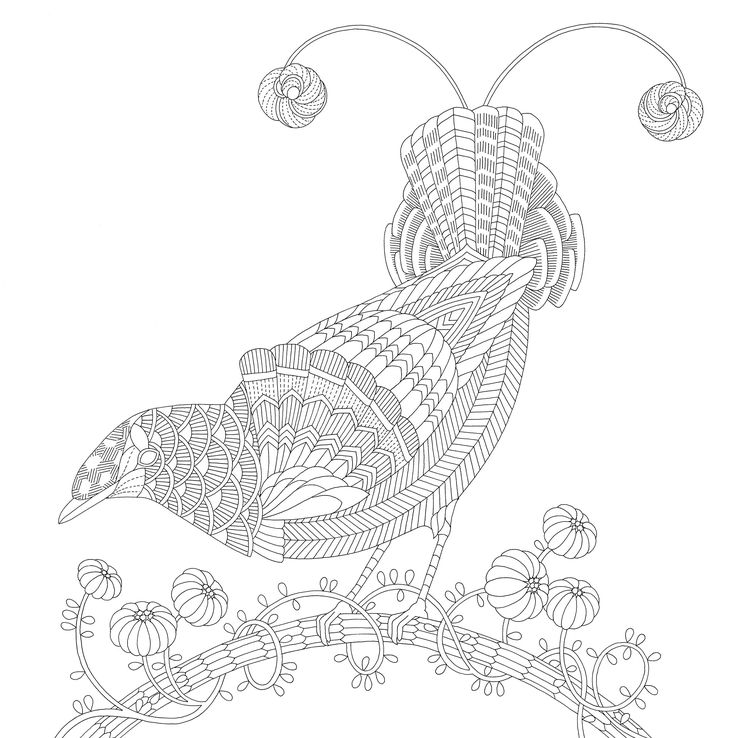 Beautiful Birds And Treetop Treasures By Millie Marotta Adult ColoringColoring PagesColoring BooksBeautiful