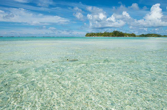 Le rêve polynésien   Lune de miel insolite en Polynésie #Polynesie #Polynesia #Luxe #Rangiroa #Island #LeSauvage #Robinsoncrusoe #honeymoon #Lagoon #Blue #Snorkeling #Love