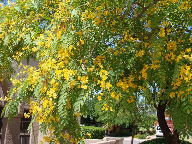 21 best nitrogen fixers for the greater san diego area images on pinterest