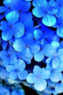紫陽花 ~2~