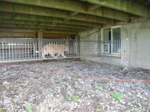 So Perfect Enclosed Fenced Cat Walk With In Out Through