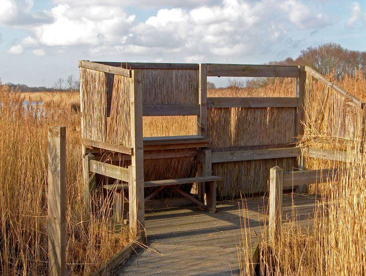 birds observatory platform 2
