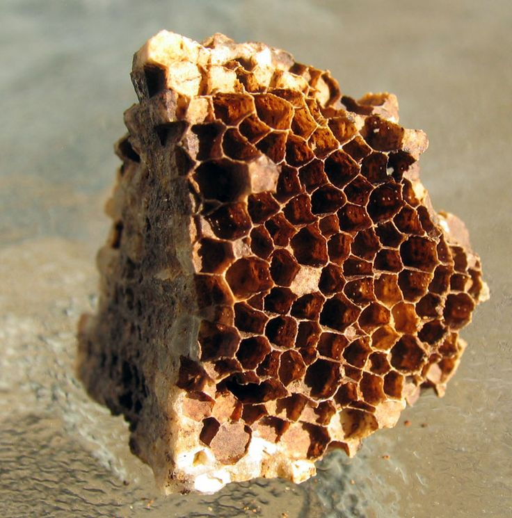 17 Best Ideas About Wasp Nest On Pinterest Wasp Spray