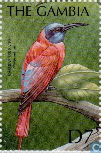 Gambia - Tropical birds 2000
