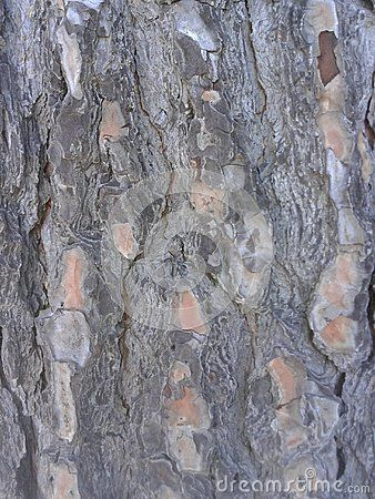 Gray Tree Bark Pattern Background  © Morgan Capasso