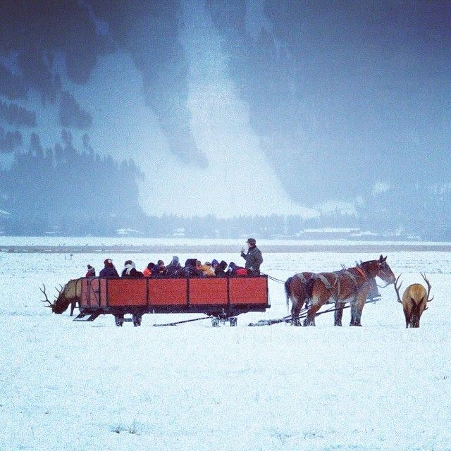 Ride through the National Elk Refuge by sleigh in Jackson Hole, Wyoming. This was fun!!