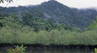 En algunas ensenadas es posible observar formaciones vegetales características de la interfaz entre el mar y la tierra, como los manglares enanos. Detrás de ellos, generalmente crecen bosques exuberantes de gran porte y alta diversidad.