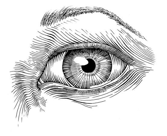 Ink Drawing - Google images.