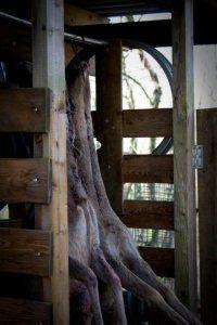 Langtidsstegt Dyrekølle med Råkost i Honninglage