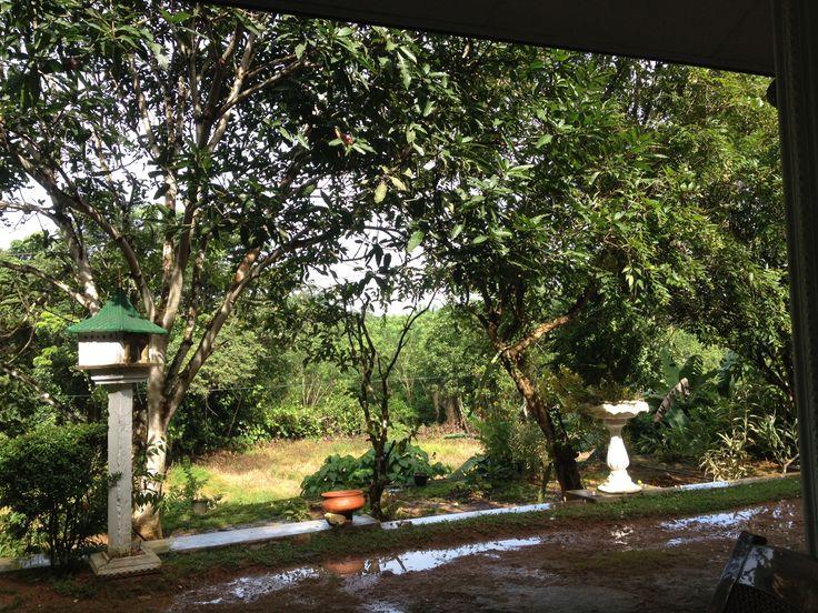 de tuin van HomeStay Srilanka