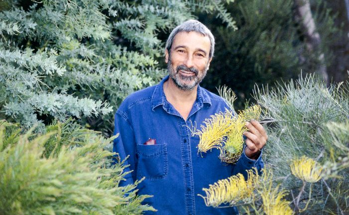 Best grevillea plants