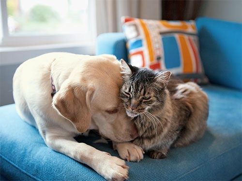 Have a pet at home but want another one? Find out how to make your #pets friends!