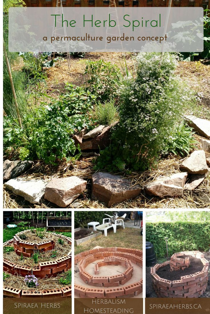 25 best herb spiral ideas on pinterest spiral garden for Permaculture garden designs