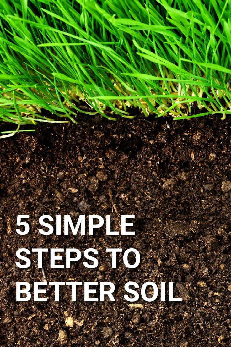 how to prepare soil for sod plugs