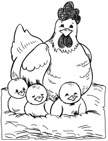 hen n chicks nesting