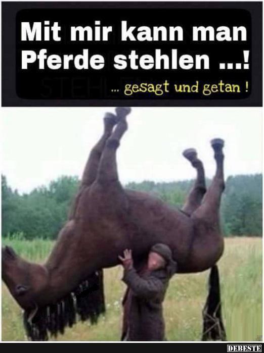 Mit mir kann man Pferde stehlen! (mit Bildern)   Guten ...