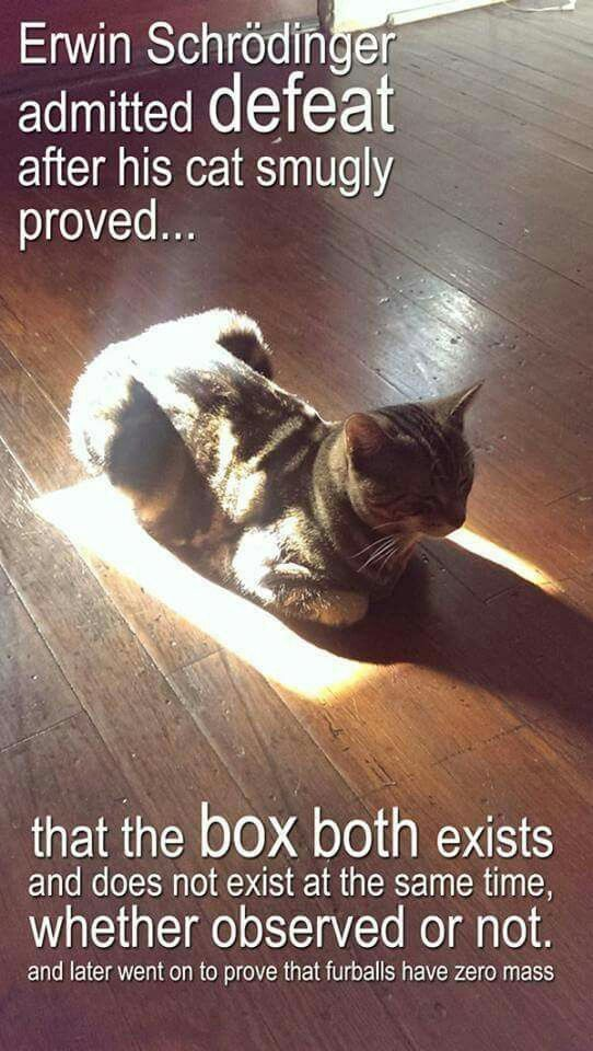 Sounds like Schrodinger's Cat was a smug, snarky little theorist. And perhaps a git. ;)