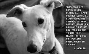 CITAS Y FRASES CÉLEBRES SOBRE ANIMALES   Si un hombre aspira a una vida correcta, su primer acto de abstinencia es el de lastimar animales.Tolstoy Las mentes más profundas de todos l…