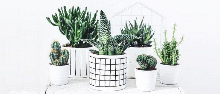 18 roślin, które oczyszczą powietrze w twoim mieszkaniu