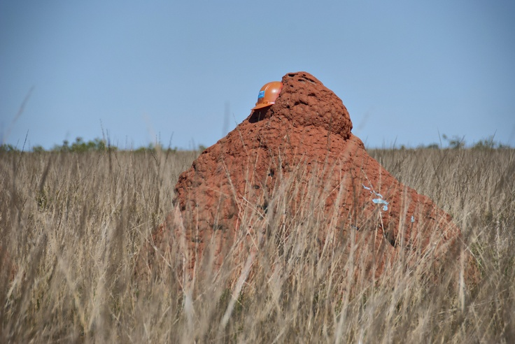 Fair well to the Pilbara, miners leaving the area leave their helmets on the termite mounds