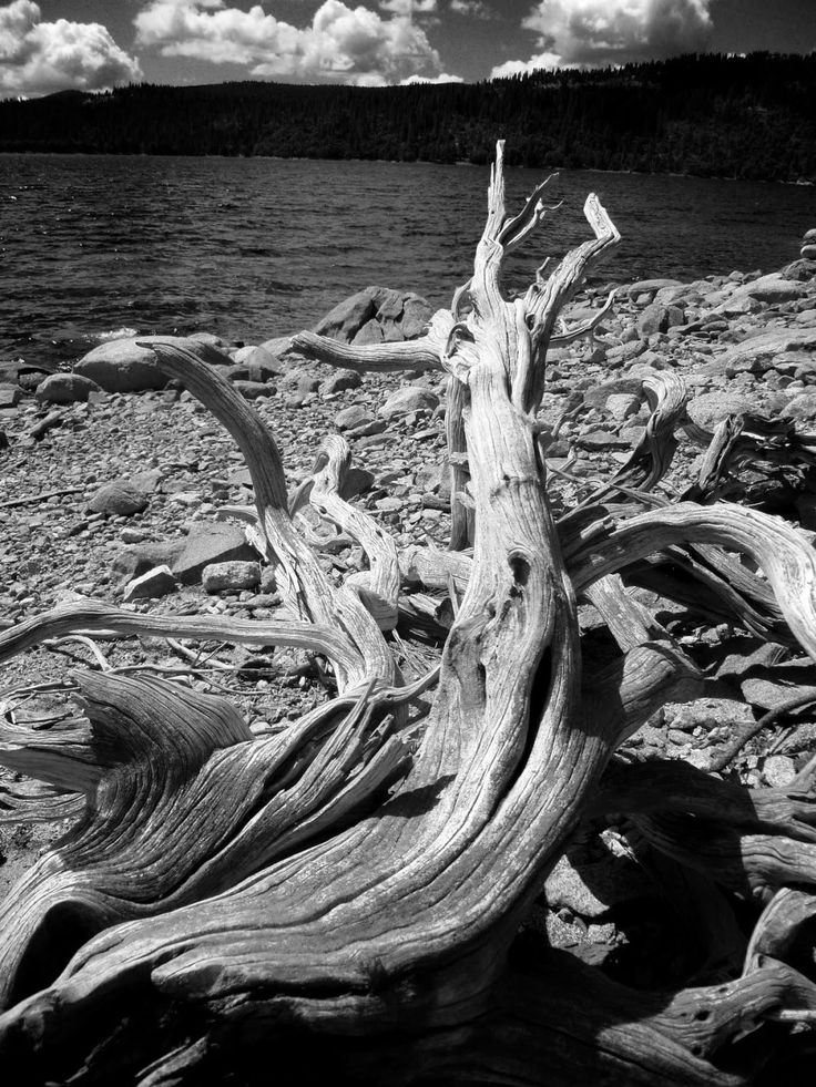 Galería: Ansel Adams | Oscar en Fotos