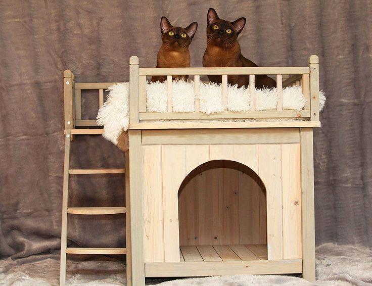 Домики для кошек: все тонкости правильного выбора