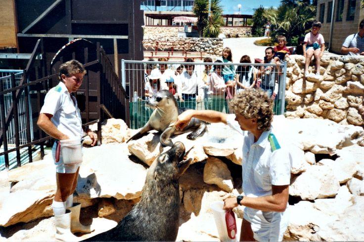 Sea Lion Feeding - Brutus & Livingston
