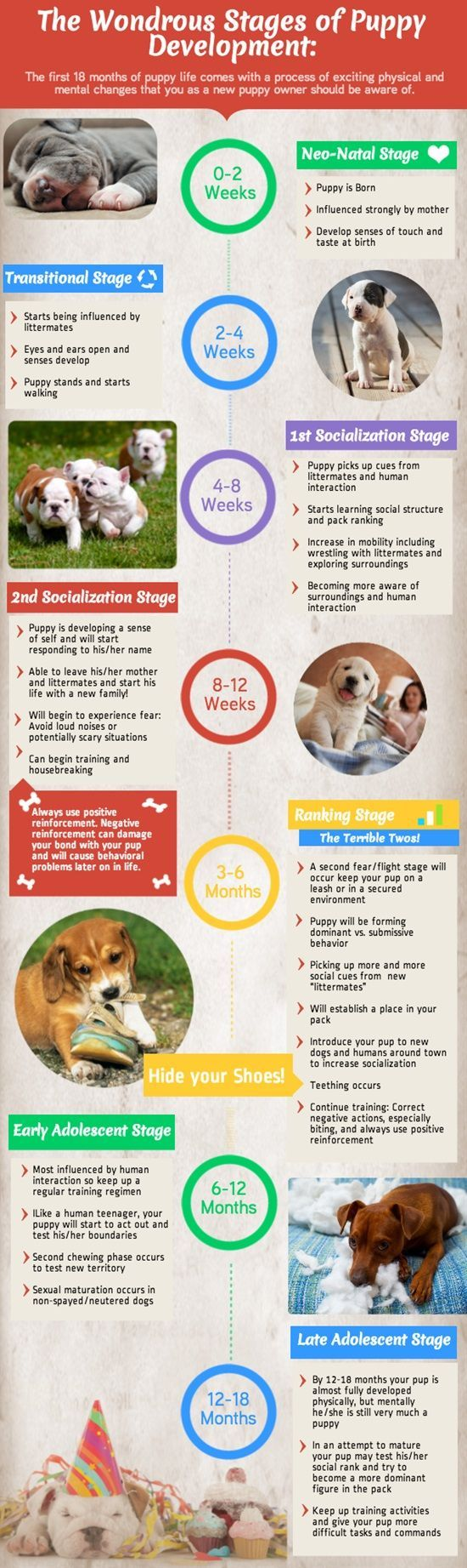 how to take care of puppies from birth