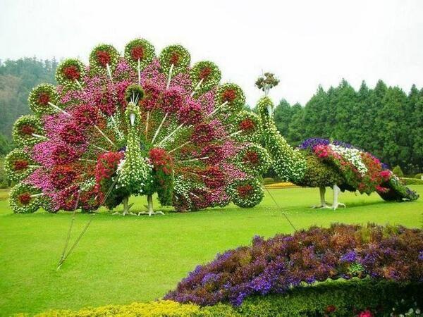 Beauty Of Peacocks   Plant Sculpture Topiary Garden Art