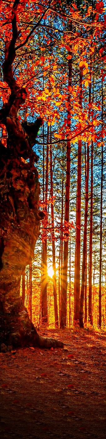 ♥ Sunset in the forest..