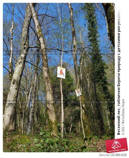Весенний лес, таблички Береги природу с детскими рисунками, Кавказский заповедник © DiS / Фотобанк Лори