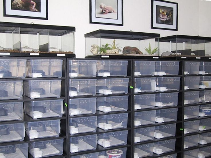 A very chic and clean reptile room but more open air than this :)