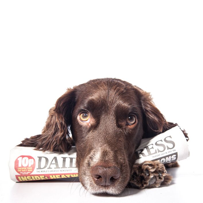 Sprocket the Sprocker loves to keep up to date with what's going on in the world