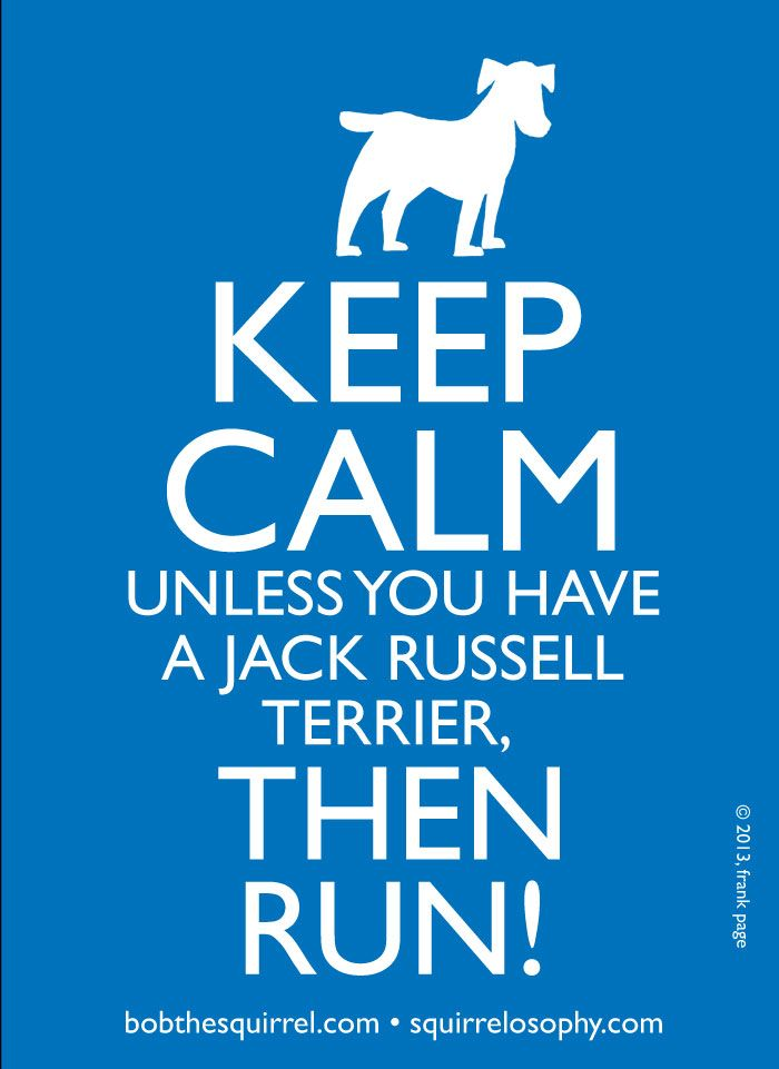 keep_calm_jack_russell » Bob the Squirrel – by Frank Page
