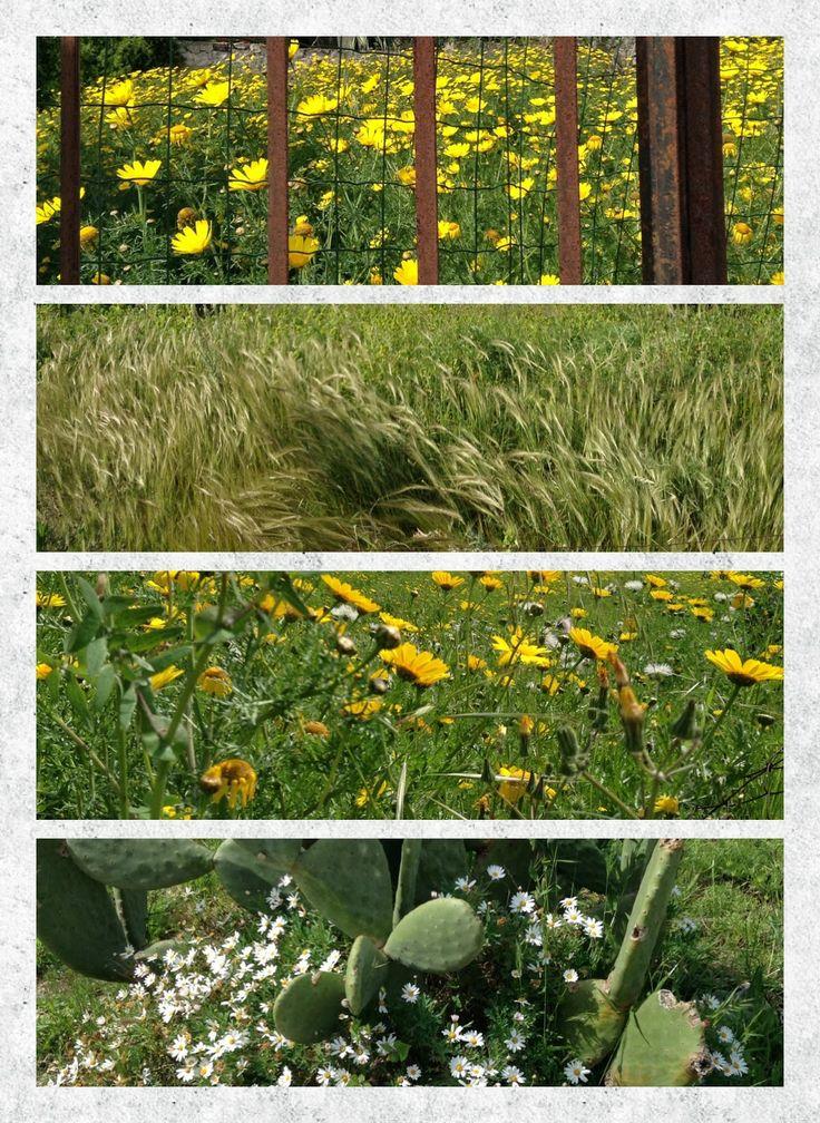 Mercurelli Sardinia Collage