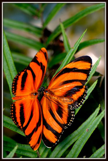 Bright Orange Butterfly.