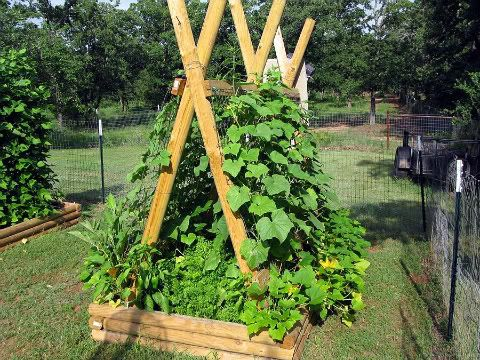 Trellis for cucumbers, etc...: Outdoor Ideas, Garden Ideas, Veggie Gardens, Vine Beds, Trellis Ideas, Growing Gardening Ideas, Vegetable Gardens