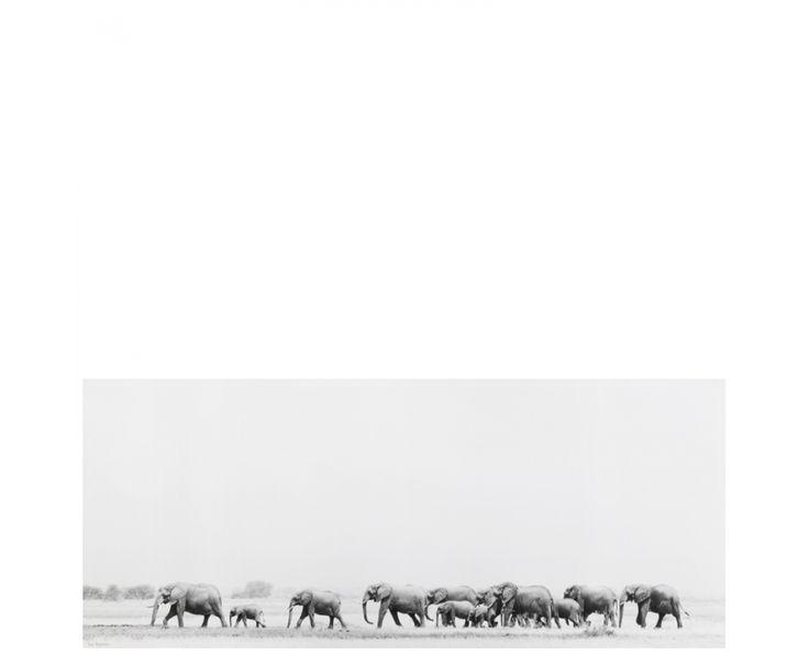 Elephants Walking Wall Art - Homeware | Weylandts South Africa