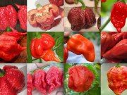 Top 12 Hottest Peppers in the World 2016