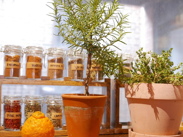4 No-Fail Indoor Herbs (and How to Grow Them) — The Living Kitchen with Abbye Churchill