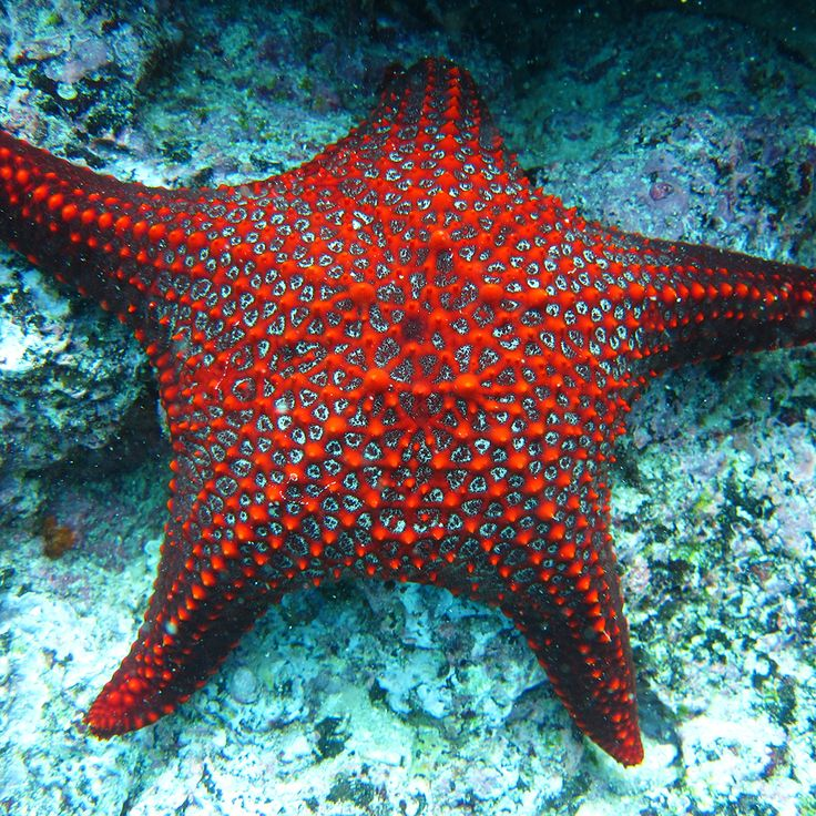 """Look at the stars Look how they shine for you."" - Yellow by Coldplay  #galapagos #starfish #haugancruises"