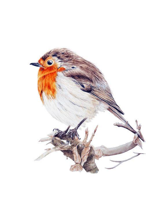 Robin  fine art print by marieburke1 on Etsy, $22.00