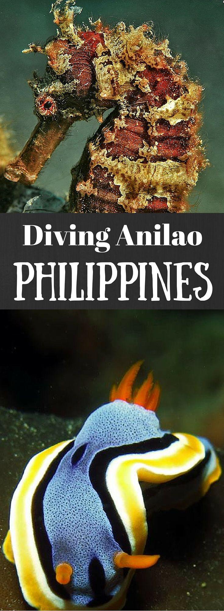 Underwater Photo Series Part Eight: More Anilao | Art of Scuba Diving