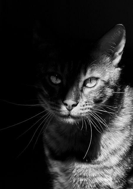 Kat half in de schaduw. Dit is een clair-obscur contrast omdat de kat half in de schaduw staat en half in het licht.
