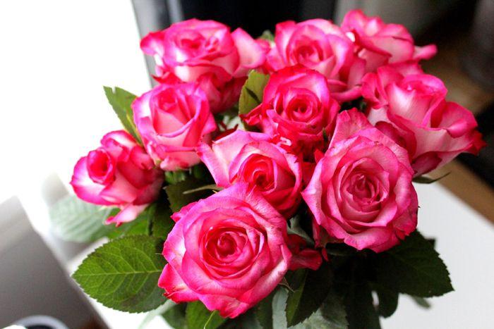 pink roses http://jozellablog.blogspot.fi/2014/03/kuulumisia.html