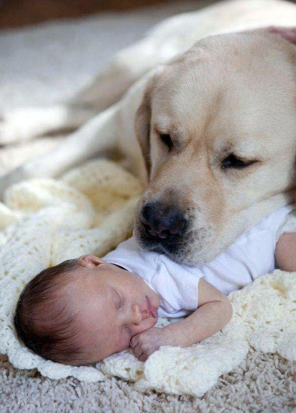 Moment Câlin entre un Labrador et Bébé