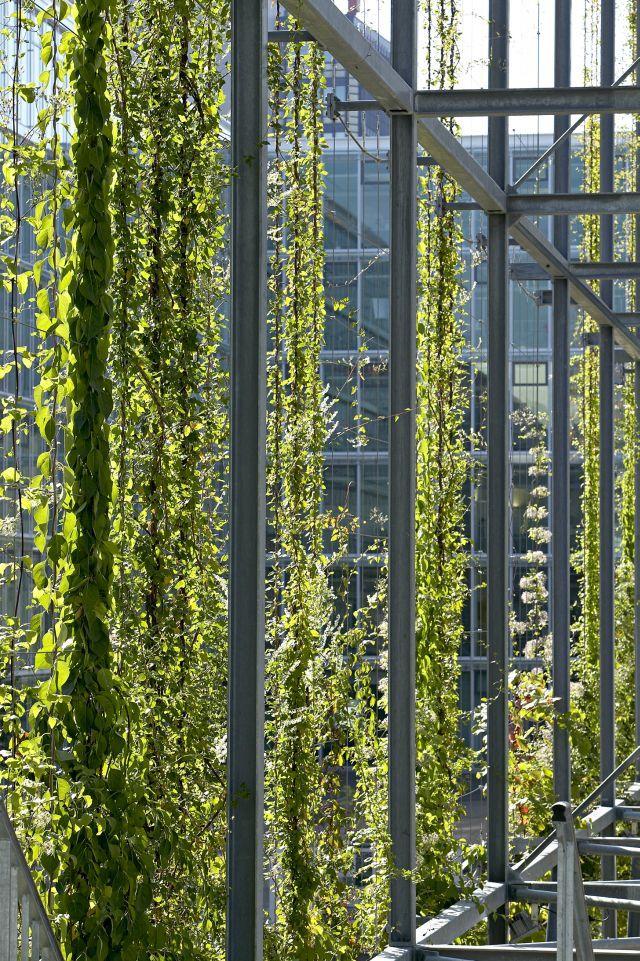 Green Walls Jakob Rope Systems Muros Verdes